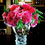Rare Flowers of Tree peonies in a Juliska vase.