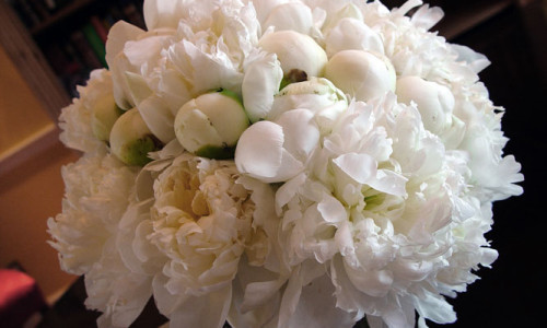 Lovely all peony Bridal Bouquet | Floral Design by Chambliss Design