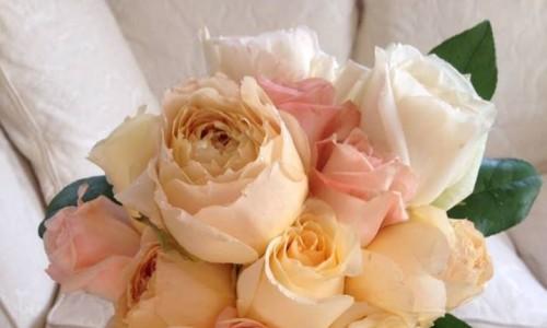 Pastel garden roses for a Louisville wedding.