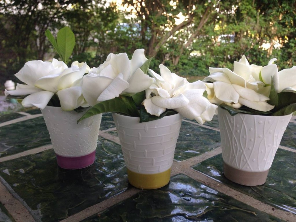 Pretty summer offering of gardenias in bisque containers