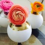 Ranunclus Flowers